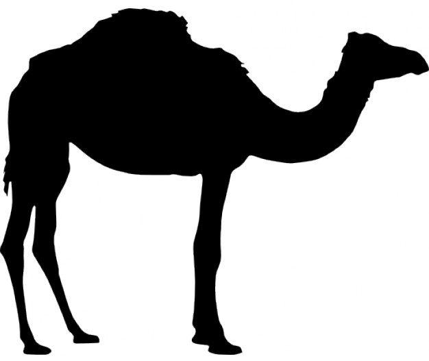 Hybrid Camels